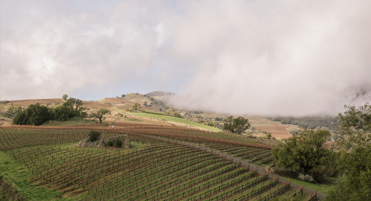Fog rolling over the Alexander Mountain estate vineyard